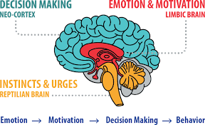 brain decision process